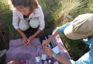 Bergstrom Award helps Ph.D. student with research on threatened grassland birds in Argentina