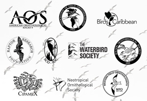 Joint Society Statement on Ornithological Field Safety