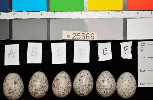 hosp_eggs
