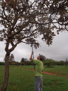 Diego de Araujo checking a nest