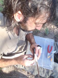Joaquin attaching geolocator/Joaquin colocando geolocalizador